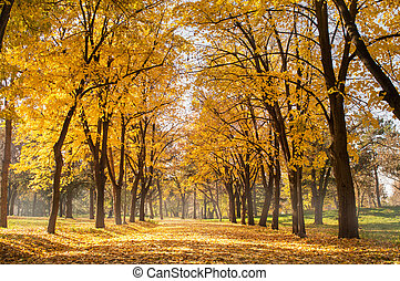 Autumn park scene of a path in fallen leaves