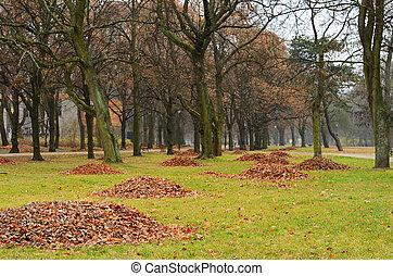 Autumn park with fallen leaves