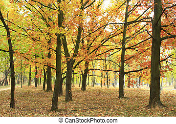 Autumn park with trees and yellow leaves
