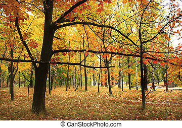 Autumn park with trees