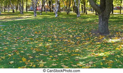 Autumn Park with Yellow Leaves, Grass and Trees. Autumn...