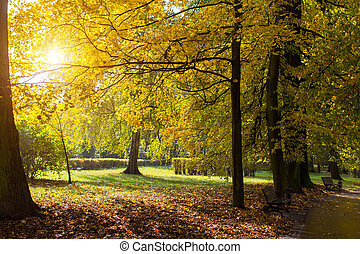 Autumn Park with yellow leaves
