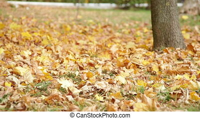 autumn park with yellow leaves on grass
