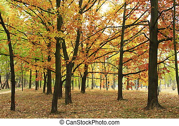 Autumn park with yellow trees