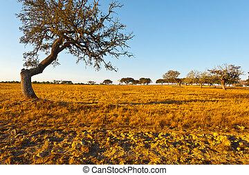 Autumn Pasture in the Portugal