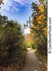 Autumn path in the park area