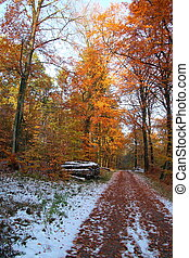 Autumn path in winter forest