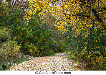 Autumn Path - Leaf strewn path through autumn landscape