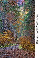 Autumn path through forest