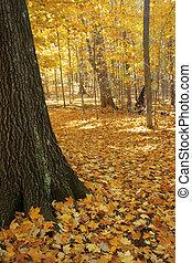 Autumn path through trees