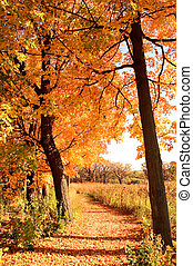 tree lined path in fall with golden colors