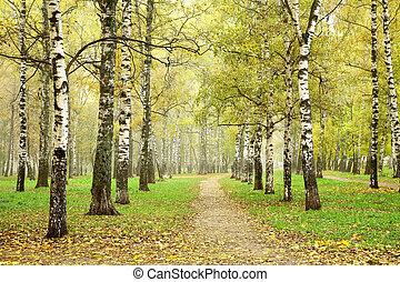 Autumn pathway in october morning mist birch grove