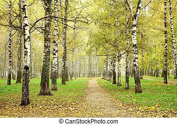 Autumn pathway in october morning mist birch grove