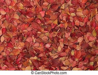 Autumn pattern. Barberry