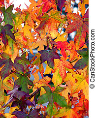 Autumn pattern - Colorful autumn leaves