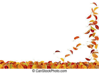 Autumn pear leaves falling down on white background.
