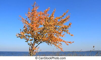 Autumn pear tree on the background of the sea