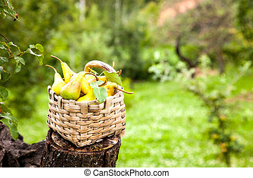 Autumn pears on wood