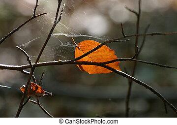 Autumn impression