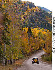 Autumn - Yellow aspens in autumn, Colorado.