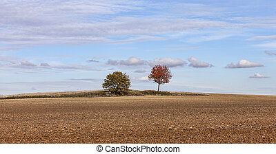 Autumn Plain Landscape