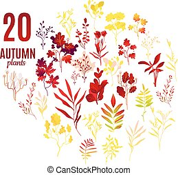 Autumn plants and leaves set with various foliage decorative elements.