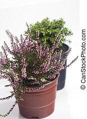 autumn plants in the pots