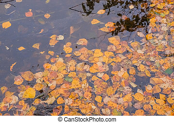 Autumn pond covered with beautiful yellow and orange leaves. Warm autumn colors.colorful leaves floating in the water, autumn landscape, yellow leaves all around
