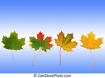 Abstract of a line of maple leaves with the colors progressing from green, red and yellow, the colors of Autumn. Set against a sky blue background with a white horizontal glow.