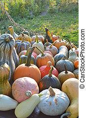 Autumn pumpkins and squashes