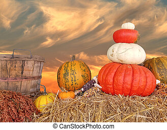 autumn pumpkins and sunset sky