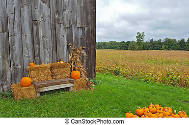 orange pumpkins on hay bales by wooden bench and barn with cornstalk