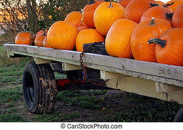 Autumn pumpkins for sale
