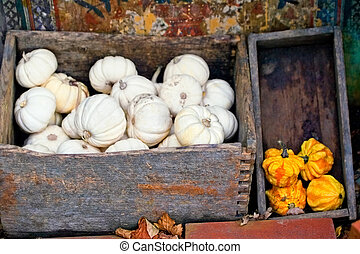 Autumn pumpkins in a boxes