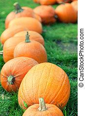Autumn pumpkins in a row