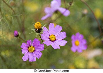 Autumn purple flowers blur background.