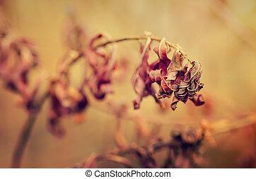 Autumn purple plant