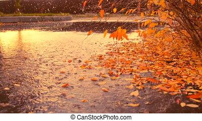 Autumn rain and leaf fall