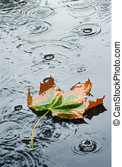 Autumn rain - Autumn leaf