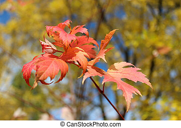 red leaves hanging on the tree