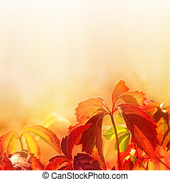 leaves on soft color background