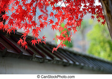 red maple leaves are cover the japan style roof