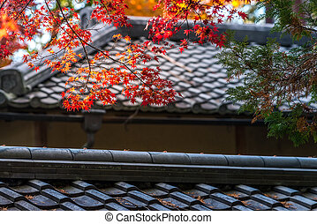 autumn red maple leaves are cover the japan style roof