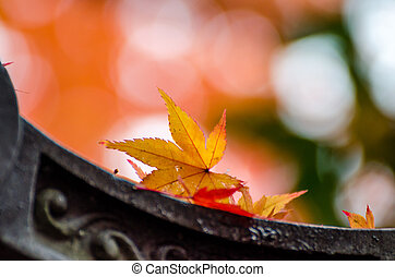 Autumn red maple leaves cover the japanese style roof