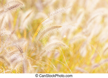 Autumn reed under sunlight