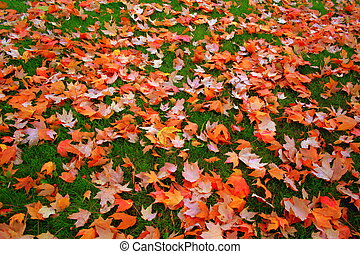 Autumn Reflection - Autumn yellow and orange carpet on the...
