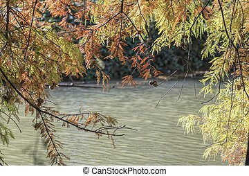 autumn reflection of tree on water