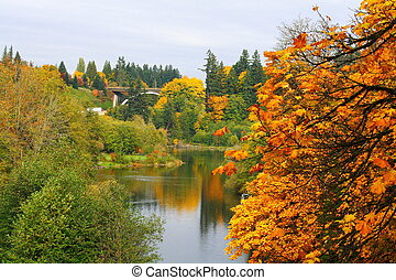 Autumn Reflection - Autumn in the park, Olympia Washington