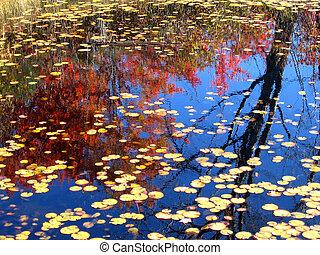 Autumn Reflections #