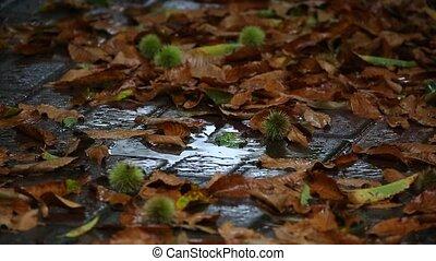 Autumn rian falling